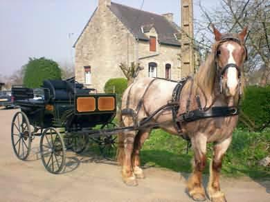attelage caleche chevaux de trait pour animer mariage et fete - Location Carrosse Mariage